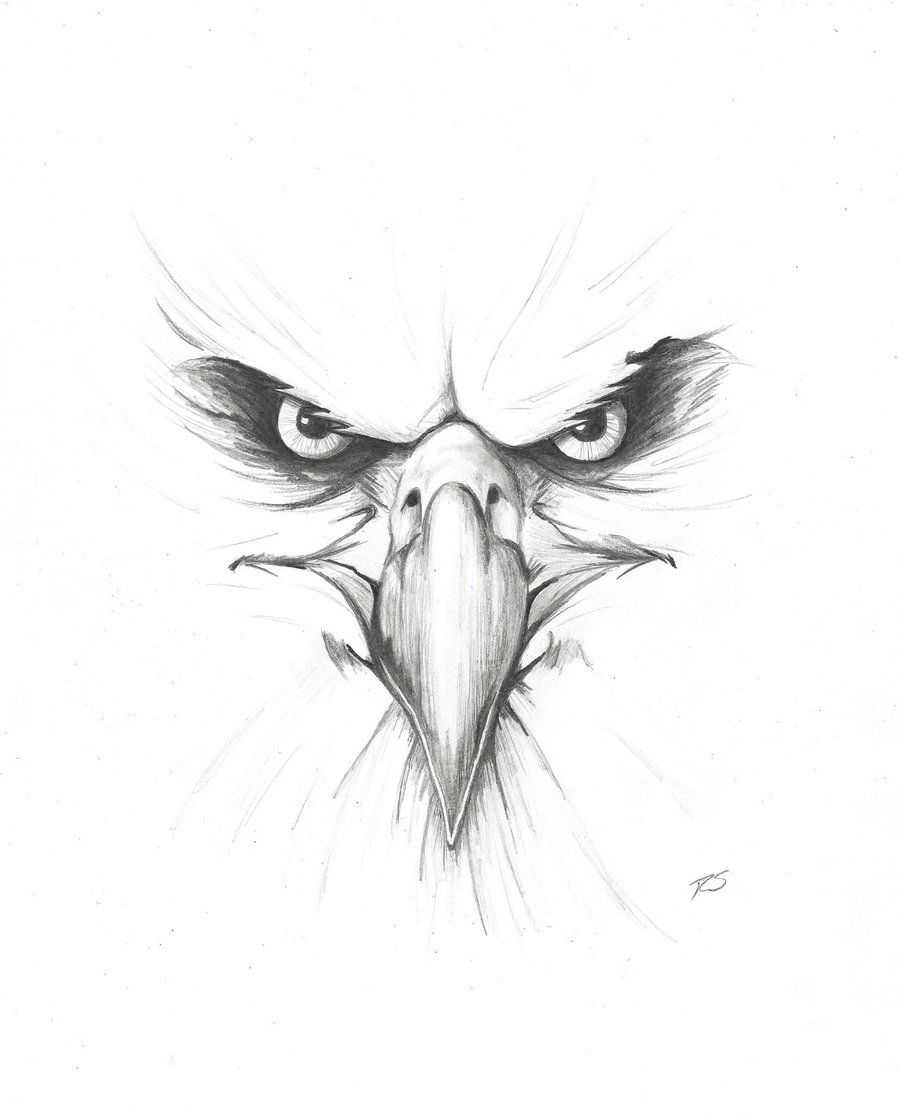 900x1114 Angry Pencil Drawings Angry Eagle~rshaw87 On Eagles