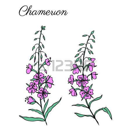 450x450 Artemisia Absinthium, Wormwood Hand Drawn Vector Ink Color Sketch