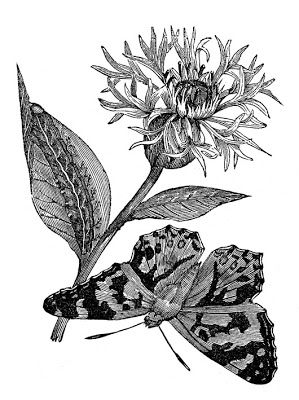299x400 132 Best Nature Notes Images On Botanical Drawings