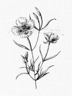 236x314 Flowers Clipart