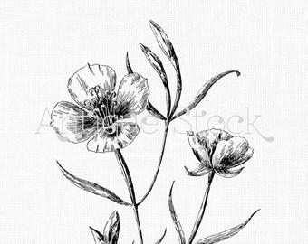 340x270 Vintage Botanical Illustration Etsy