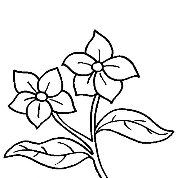 600x600 Lilac Coloring Pages