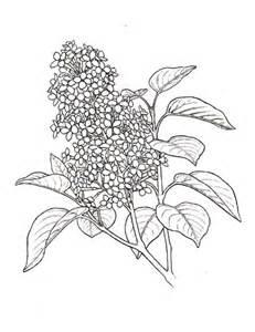 231x300 Syringa Lilac Flower Coloring Page