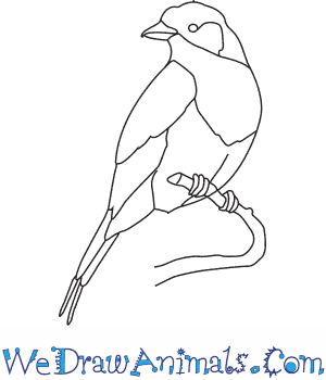 300x350 How To Draw A Lilac Breasted Roller