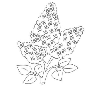 300x300 How To Draw Lilac Flower Coloring Page Coloring Sky