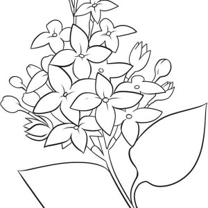 300x300 Realictic Picture Of Lilac Flower Coloring Page Coloring Sky
