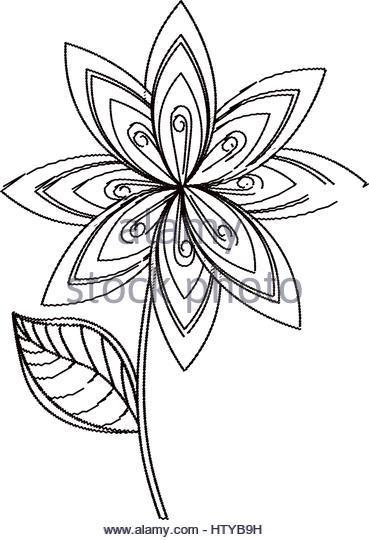 369x540 Botanical Sketch Stock Photos Amp Botanical Sketch Stock Images
