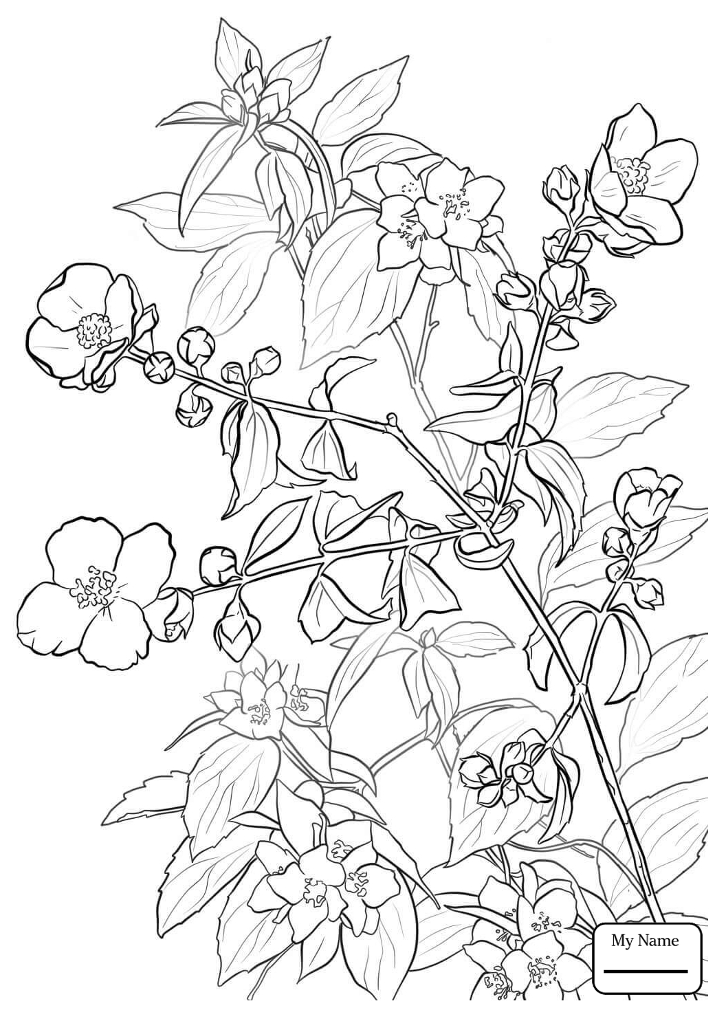 Lilac Flower Drawing at GetDrawings