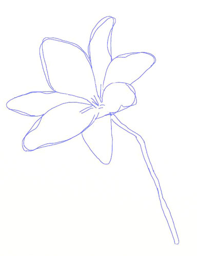 384x500 How To Draw A Lily Flower
