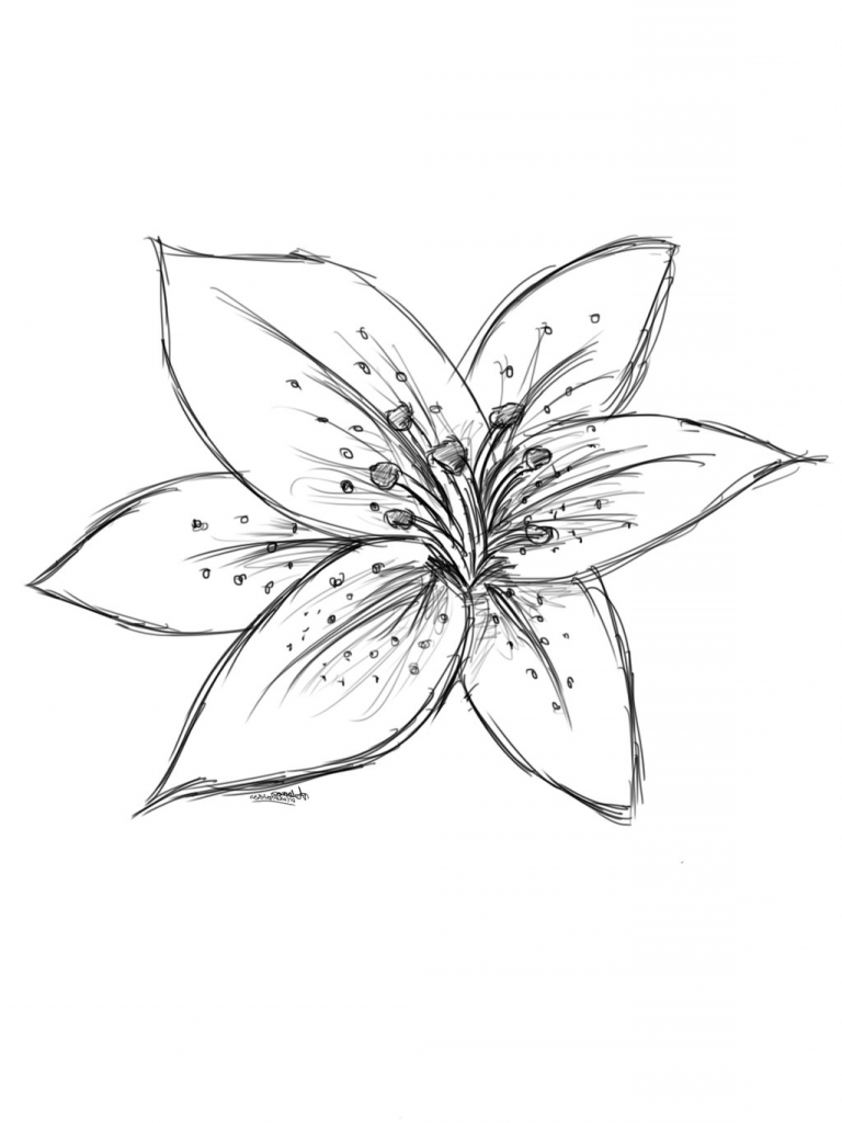 768x1024 Lily Flower Drawing