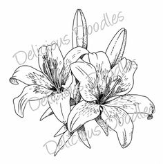 236x237 Lillies Sketch Black