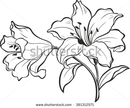 450x373 Lily Flowers. Blooming Lily. Card Or Floral Background