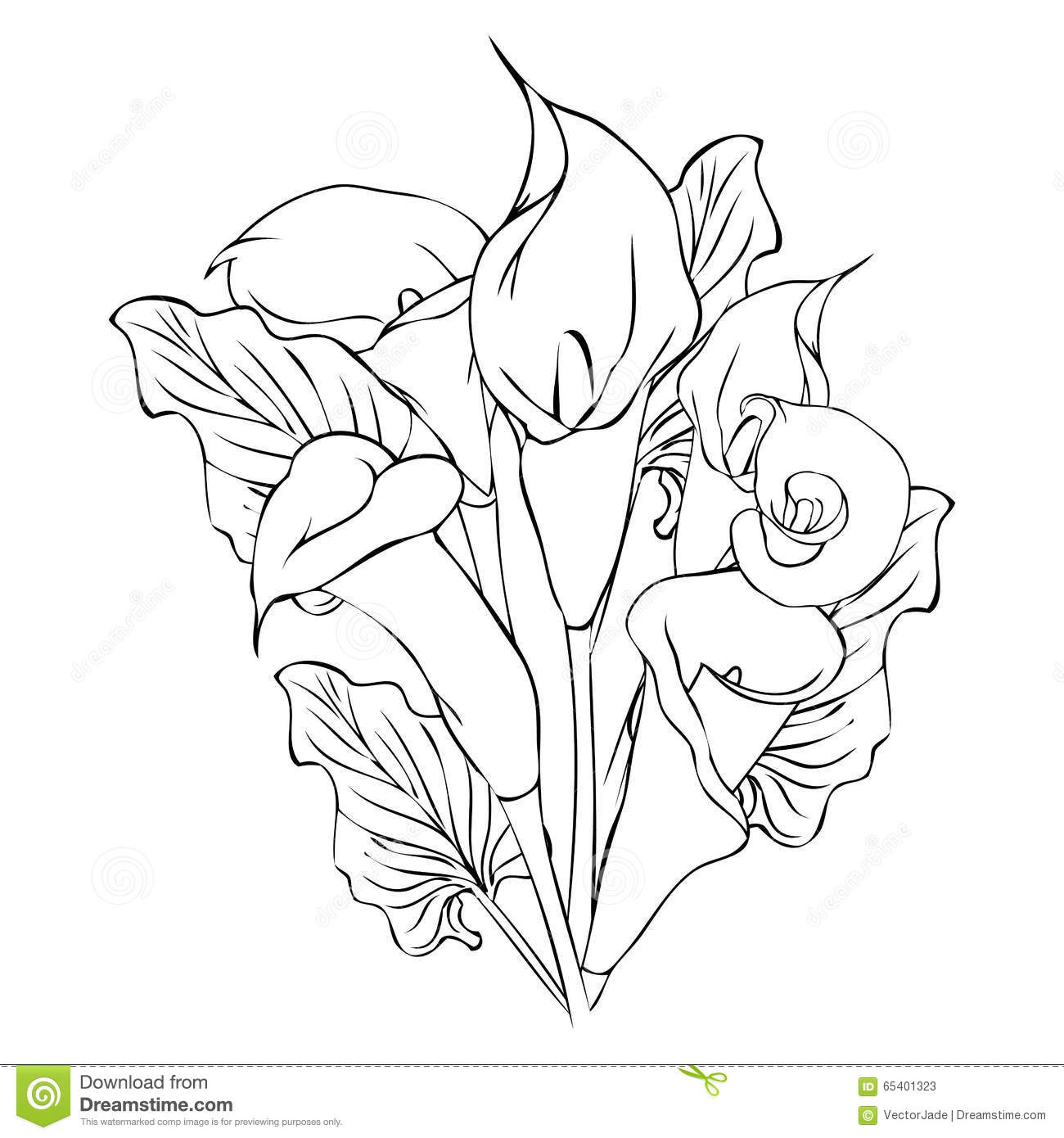 1300x1390 Calla Lily Flower Drawing Calla Lily Flowers Stock Vector
