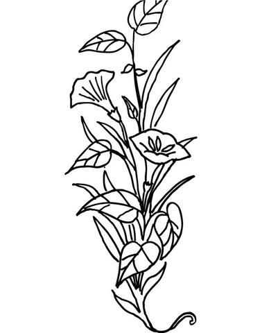 365x480 Lily Flower Coloring Page Free Printable Coloring Pages