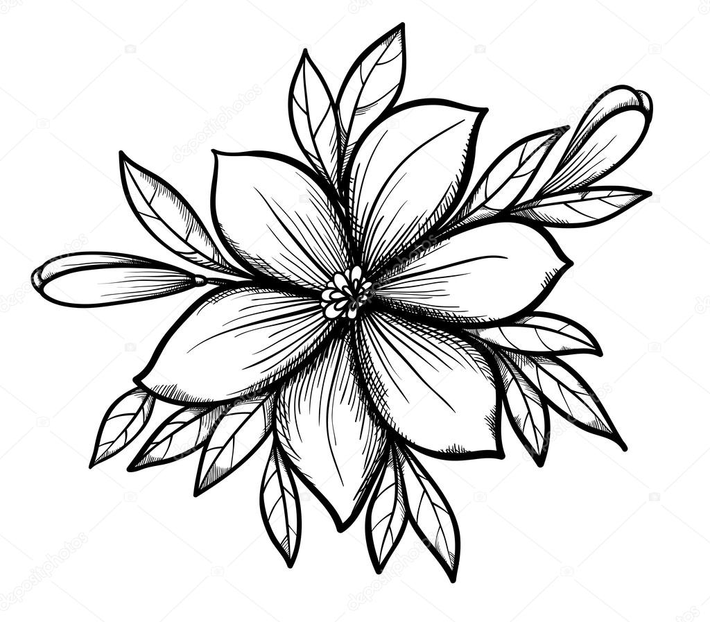 1024x897 Beautiful Graphic Drawing Lily Branch With Leaves And Buds