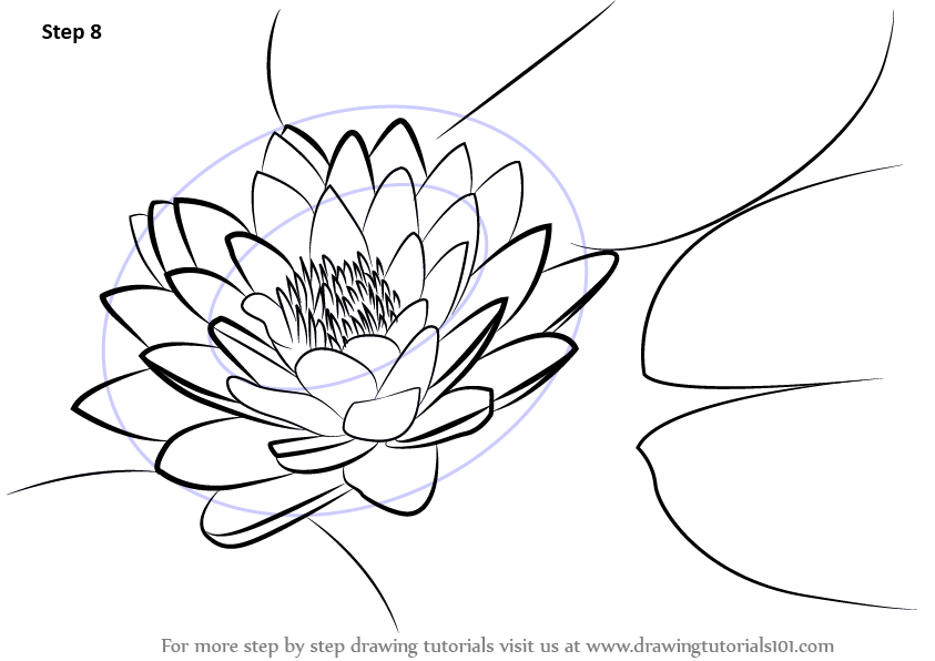 843x596 Learn How To Draw Lily Pad (Lily) Step By Step Drawing Tutorials