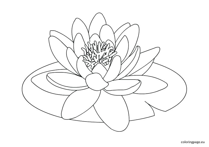 842x595 Lily Coloring Pages Plus Water Lily Pad Coloring Page Lily