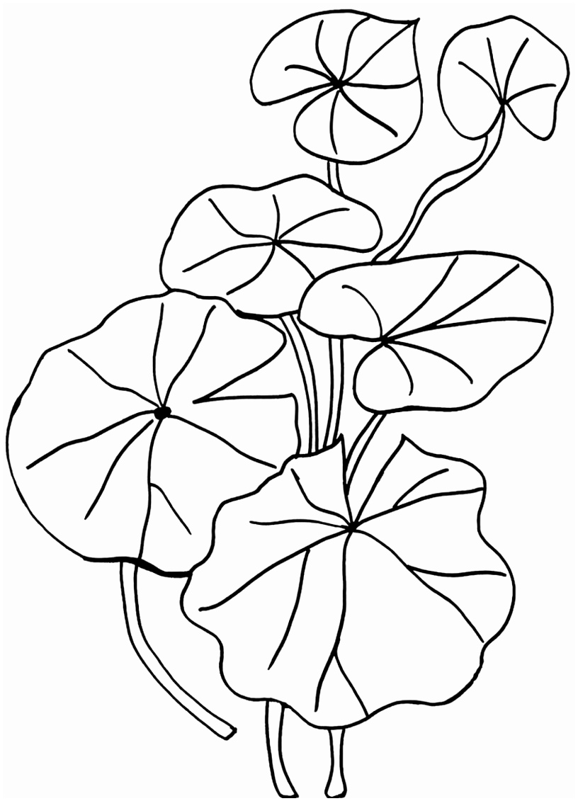 Lilly Pad Drawing at GetDrawings.com | Free for personal use Lilly ...
