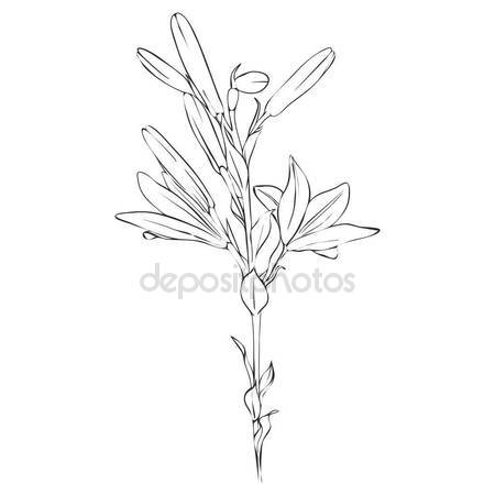 450x450 Vector Drawing Flower Of Lily Stock Vector Cat Arch Angel
