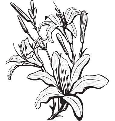 380x400 Coloring Pages Drawing Lily Flower Coloring Pages Drawing