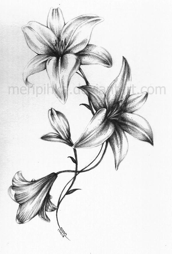 600x885 Coloring Pages Drawing Of Lily Flower Forearm Tattoo Tattoos