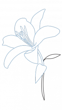 215x382 How To Draw A Lily, Flowers, Plants, Easy Step By Step Drawing