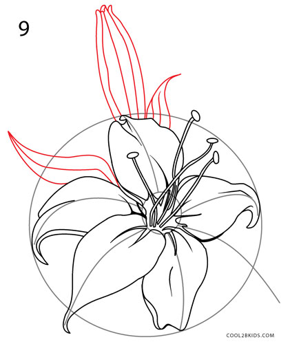 421x500 How To Draw A Lily (Step By Step Pictures) Cool2bkids