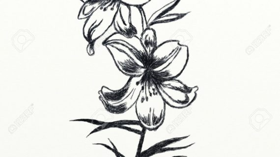 570x320 Pencil Drawings Of Lilies Bouquet Of Flowers Pencil Drawing