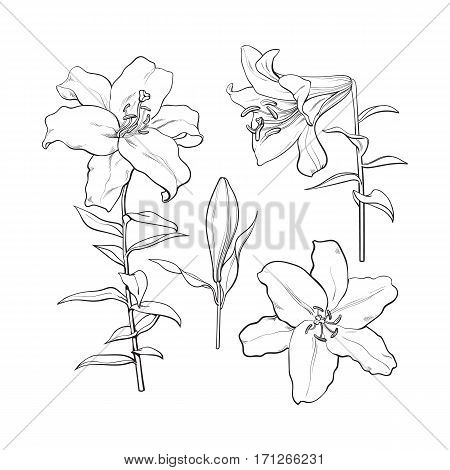 450x470 Set Hand Drawn White Lily Flowers Vector Amp Photo Bigstock