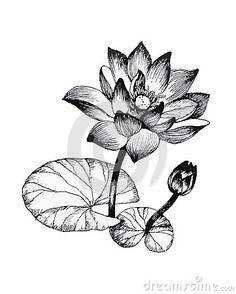 236x294 Drawn Lily Fancy Flower