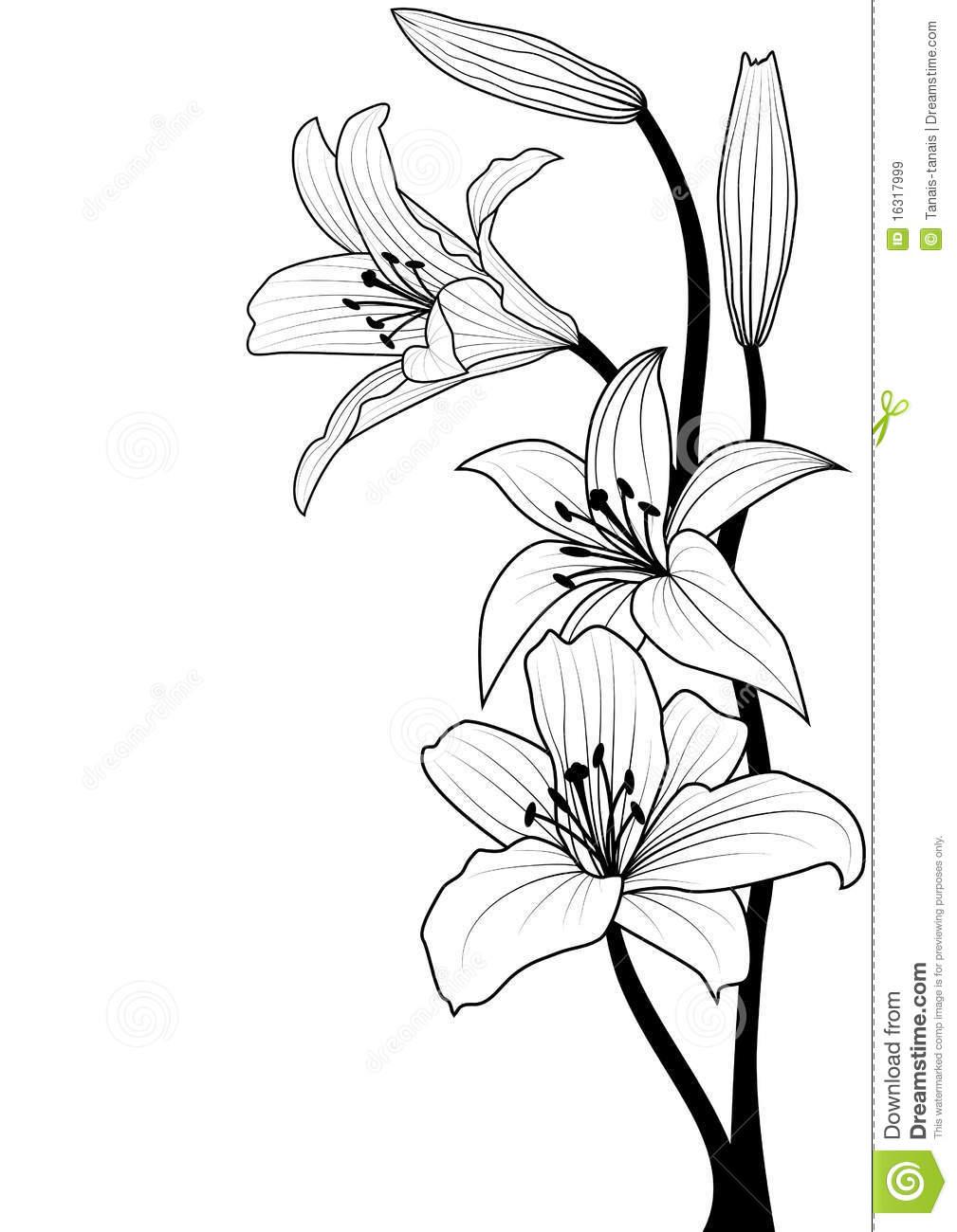 1009x1300 Drawn Lily Line Drawing