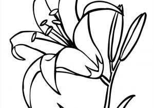 300x210 Flower Lily Drawing
