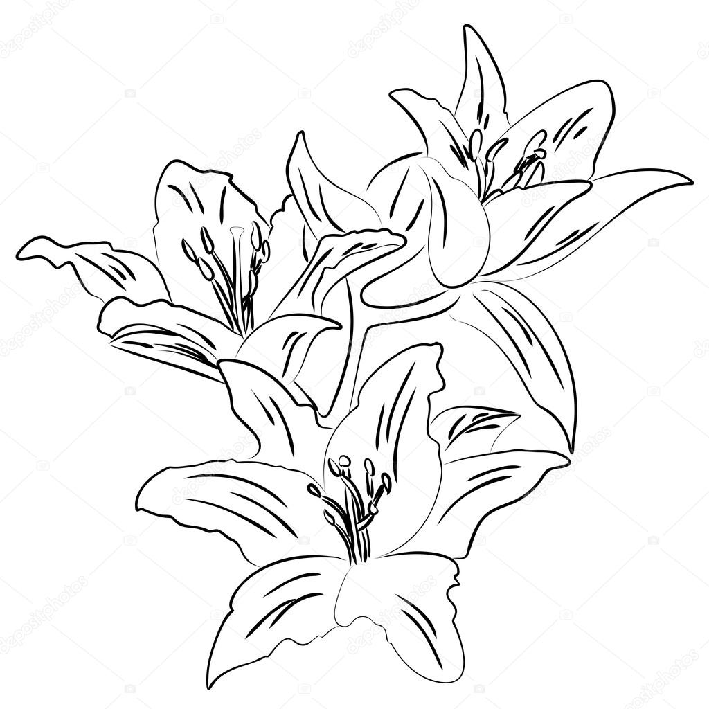 1024x1024 Lily With Bud Outline Sketch Vector Stock Vector Tiverets