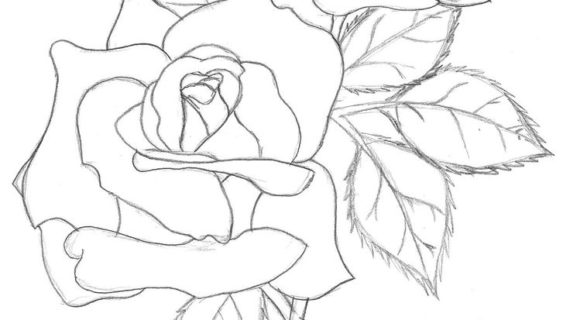 570x320 Outline Of Flowers For Drawing Lily Flower Drawing Outline