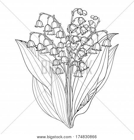 450x470 Vector Bouquet Outline Lily Valley Vector Amp Photo Bigstock
