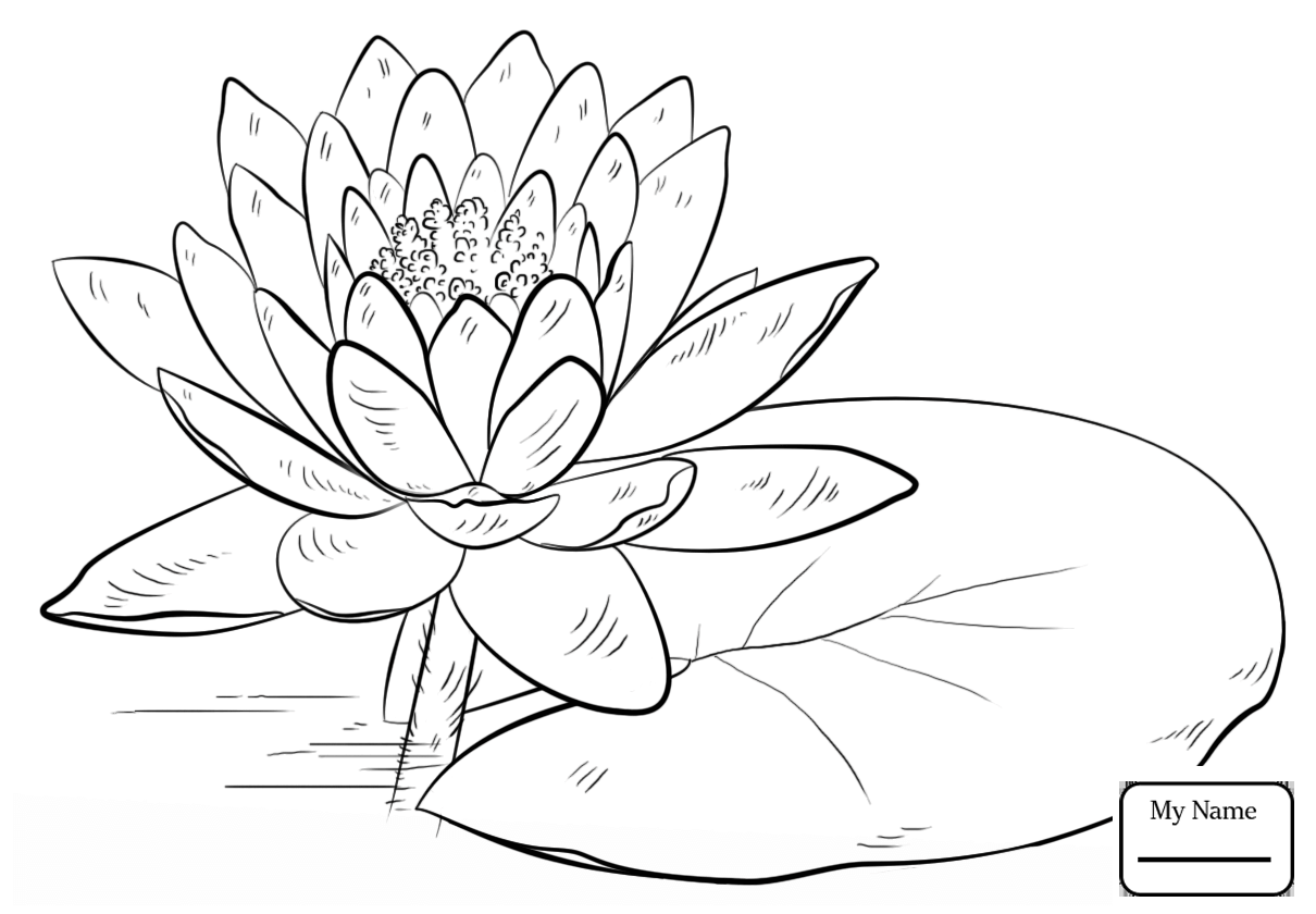1210x840 Coloring Pages For Kids Flowers Red Water Lily Water Lily