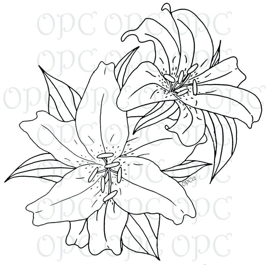 878x875 Lily Pad Sketch. Botanical Lily Pad Sketch. Step 5. Printable Lily