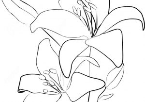 300x210 Flower Drawing Outline
