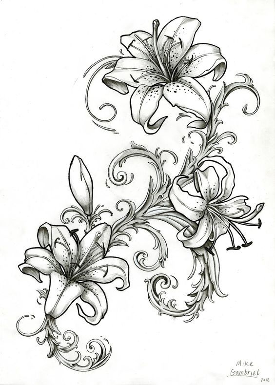 564x790 Image Result For Stargazer Lily Drawing Outline Nipp Piercings