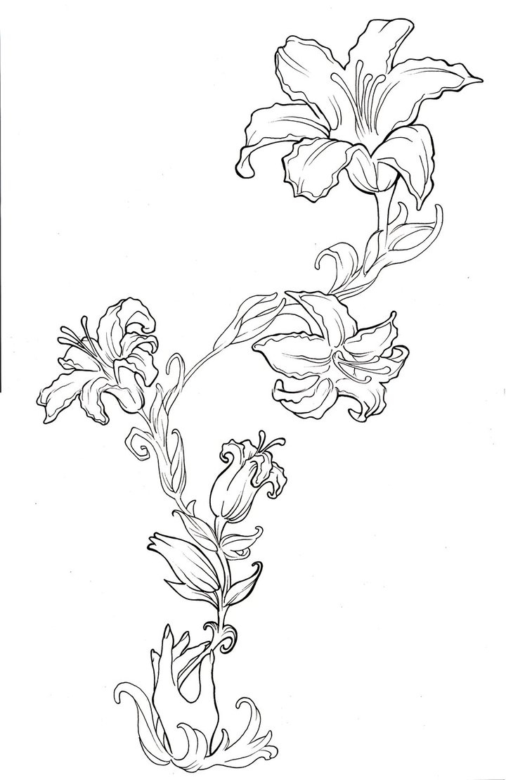 Lily drawing tattoo at getdrawings free for personal use lily 720x1109 lily flower tattoo drawing lily tattoos designs ideas and meaning izmirmasajfo