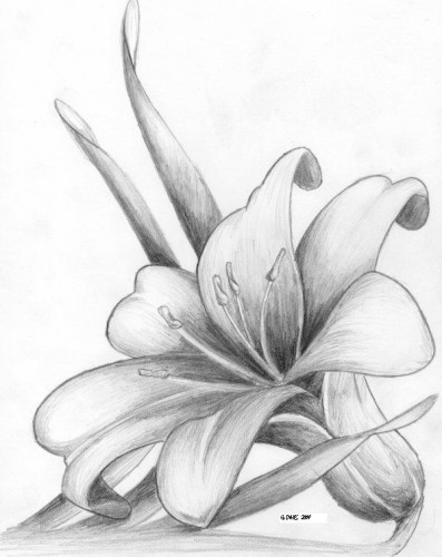 397x500 Lily Flower Tattoo Pictures Photos Good Pix Gallery Flowers