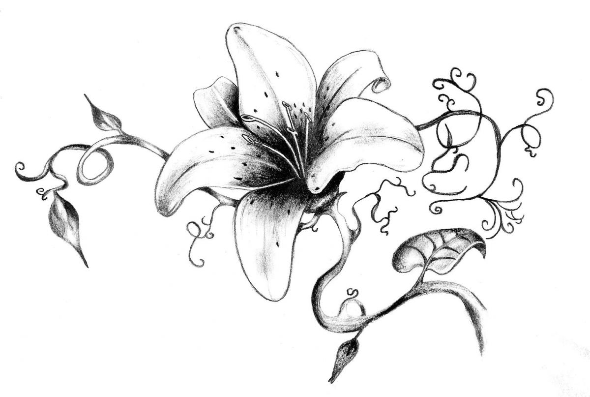 Lily drawing tattoo at getdrawings free for personal use lily 1200x807 lily tattoo design with patterns izmirmasajfo