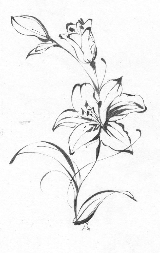 Lily Tattoo Line Drawing : Lily drawing tattoo at getdrawings free for personal