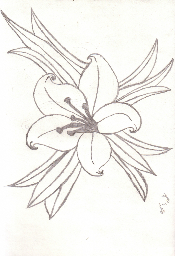 698x1024 Flower Drawing Lily Lily Flowers Drawings Lily Flower Drawings