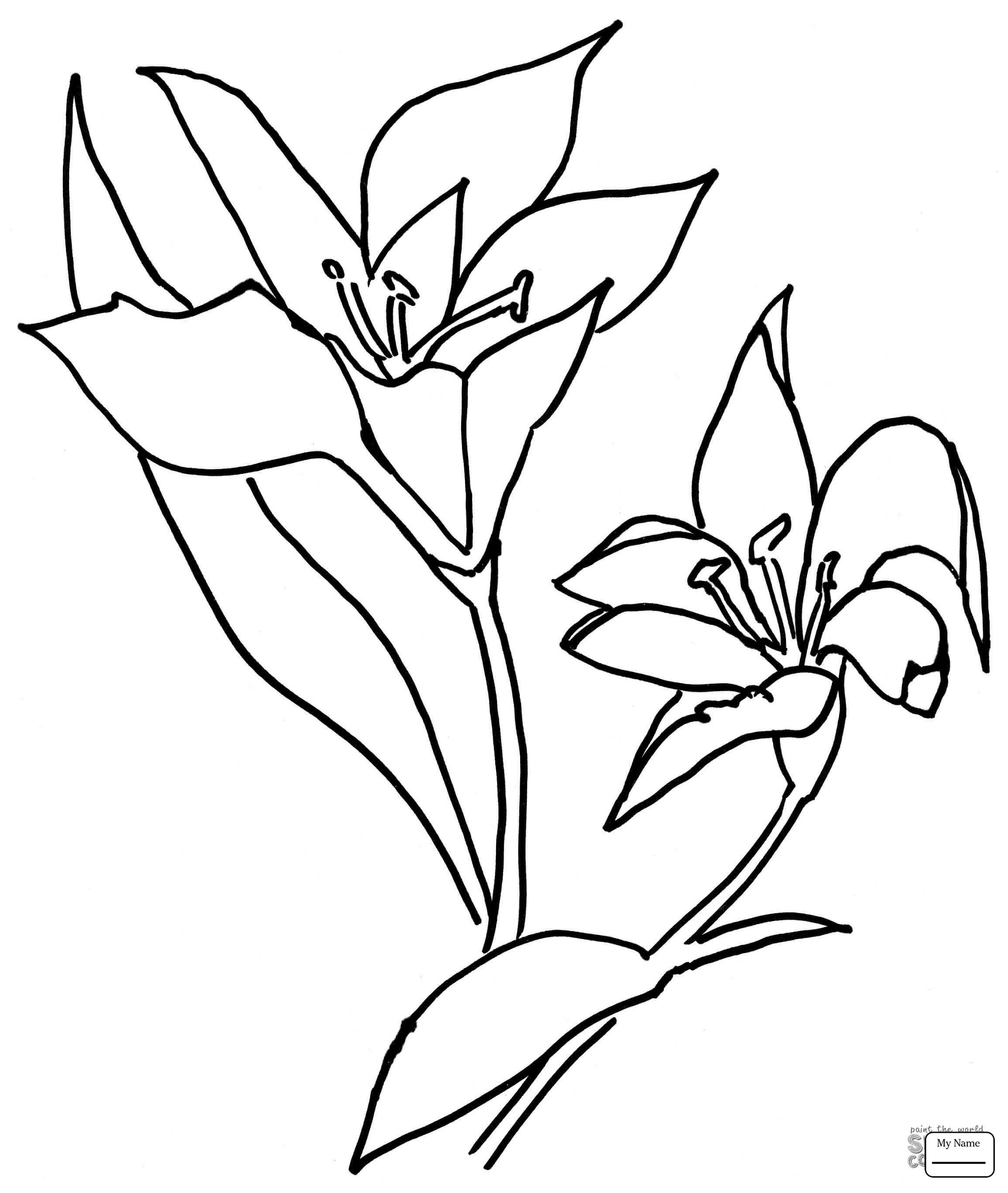 2306x2729 Lilium Flower Coloring Pages For Kids Awesome Coloring Pages