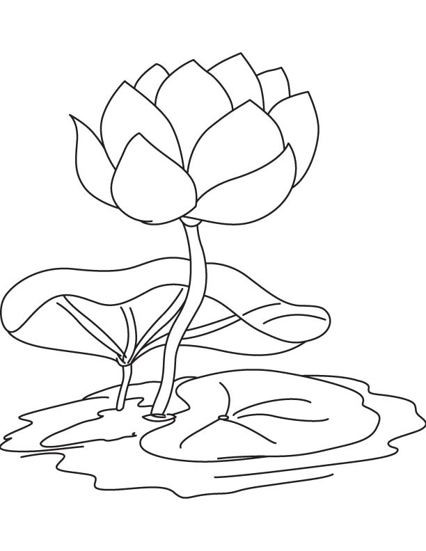 612x792 Water Lily Flower And Pad Coloring Page Download Free Water Lily