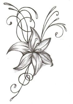 236x336 Drawing Of A Tiger Lily Tiger Lily Flower Drawing Tiger Lilies