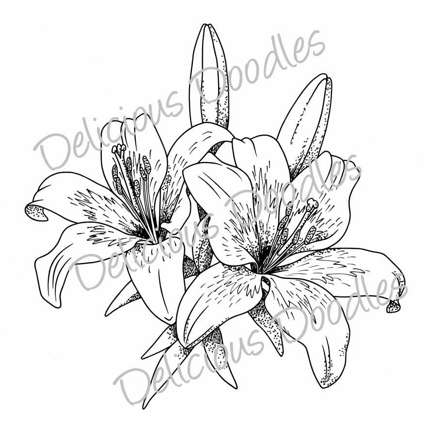 Line Drawing Of Lily Flower : Lily flower line drawing at getdrawings free for