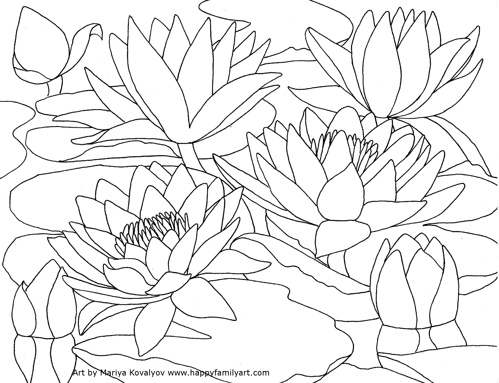 2000x1535 Water Lily Coloring Pages Free Printable Lilies Flowers Easter Pad