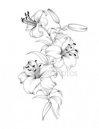 343x450 Calla Stock Vectors, Royalty Free Calla Illustrations